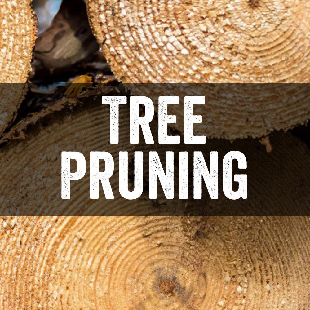 Tree Pruning Vail Colorado