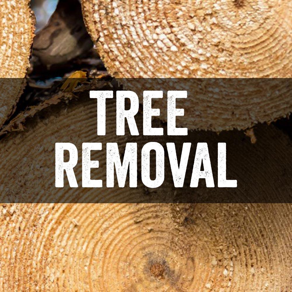 tree removal vail colorado
