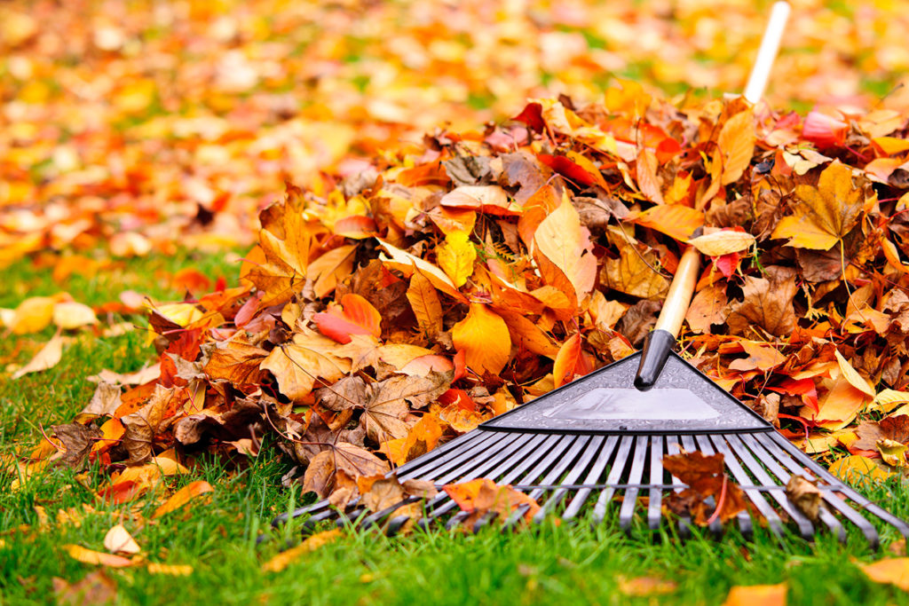 raking leaves for winter prep